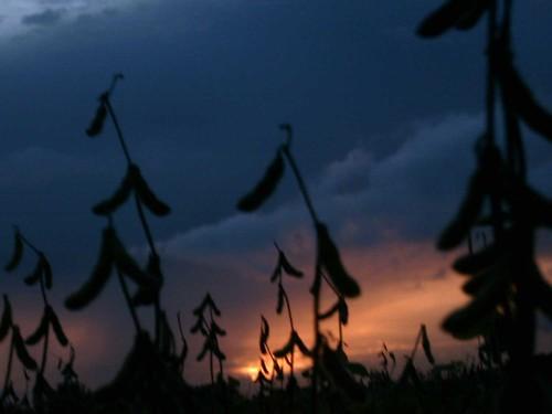 foglie al tramonto