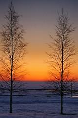 Oulu - Simplicity (Nallikari Beach) (Lucio José Martínez González) Tags: travel viaje trees winter sunset sea snow beach suomi finland geotagged mar arboles nieve playa baltic invierno puestadesol oulu scandinavia 100club finlandia smörgåsbord helluva báltico escandinavia 50club luciojosémartínezgonzález luciojosemartinezgonzalez holidaysvacanzeurlaub geo:lon=254138333333333 geo:lat=650283333333333 northernostrobothnia
