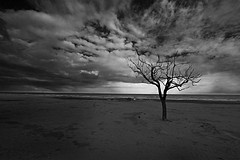 sadness (kozan) Tags: winter sky tree beach clouds sadness solitude nuvole mare branch desert branches dry cielo melancholy albero inverno freddo spiaggia malinconia burned allrightsreserved rami deserto tristezza secco solitudine andreacutelli httpwwwandreacutellicom giustoperfarparlarequalcuno