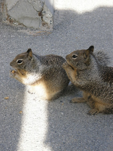 Chubby Squirrels 1