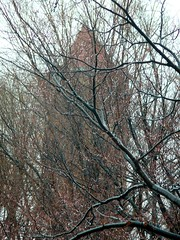 Trees, branches, and Church Tower.
