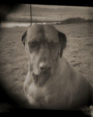 just gracie.... (bunchadogs & susan) Tags: portrait lomo gracie thelittledoglaughed holgaordiana