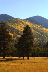 Lockett Meadow - Flagstaff Arizona (Logan Brumm Photography and Design) Tags: world road blue school trees summer arizona sky white black fall colors grass pine digital america canon outdoors shower rebel volcano town high student pond colorful university photographer seasons jeep natural wildlife small meadow vivid grand off canyon basin inner flagstaff elk logan aspen rim northern 2012 rhs nau lockett rimoftheworld locket brumm meteorshower meteror xti lbrumm lbrummphoto lbrummphotography loganbrumm