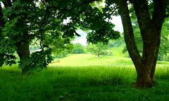 Over the hills and far away (Coseleygirl) Tags: fields trees devon