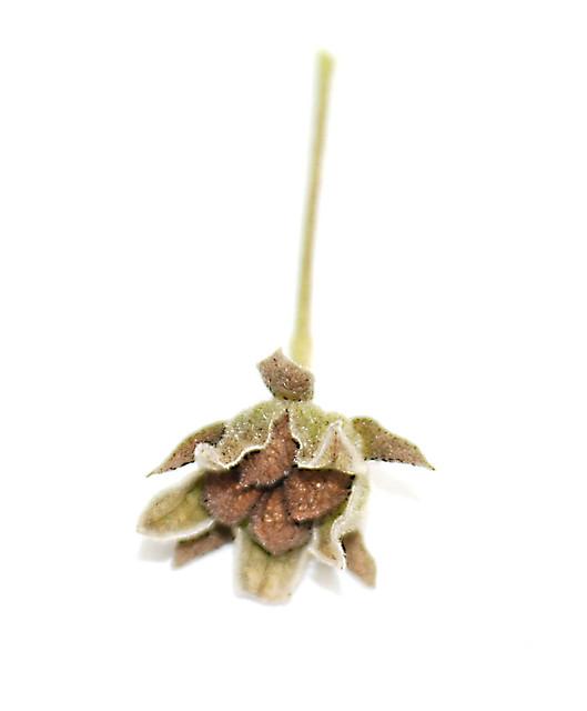 Pavonia castaneifolia image