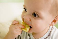 レモンを口に含もうとする赤ちゃん