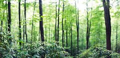 6/365 - Vast (aithom2) Tags: trees panorama green woods alone view bokeh depthoffield gorge simple redrivergorge vast