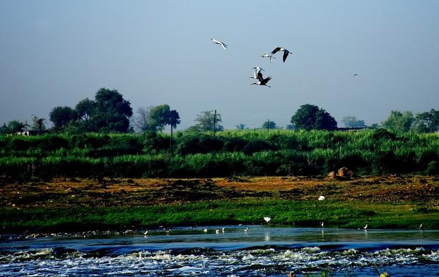 towards bluer pastures....