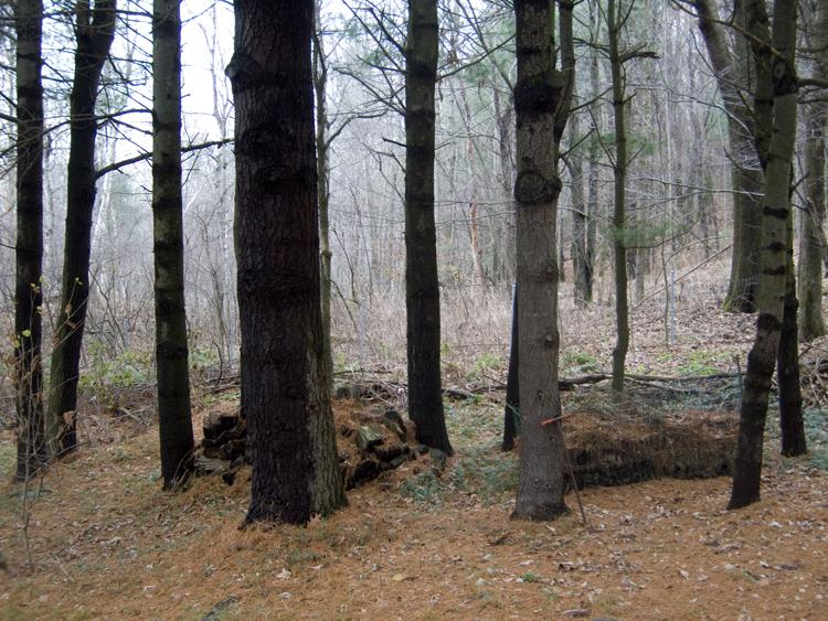 trees again