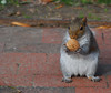 Walnut! (andertho) Tags: delete9 delete5 delete2 dc washington cool squirrel delete6 delete7 walnut save3 delete3 delete4 save2 save4 lafayettepark rodentia stb cool2 cool5 cool3 cool6 cool4 dicst cool7