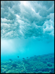 On the Reef (konaboy) Tags: usa fish hawaii surf underwater wave surfing bigisland reef kona 11391 keei delmarhousings camerasurfhousing indawatah