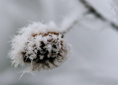 Ice Crystals...... (Astrid Photography.) Tags: winter nature netherlands artistic expression soe magiceye veluwe icecrystals peopleschoice autumnwinter naturesfinest blueribbonwinner artisticexpression specnature goldenmix golddragon shieldofexcellence astridphotography impressedbeauty ultimateshot onlyyourbestshots amazingshots wowiekazowie citrit flickrsun macromix flickrsheaven theperfectphotographer wonderfulworldmix dragongoldaward flickrstas nederlandvandaag explorer254 beecknut beukenooot