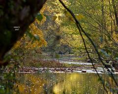 Fall trees Clear creek (vmacs) Tags: morning sun fall nature water leaves river nikon handheld nikkor70200vr reflextion clearcreek fallnature naturepics d80 70200vr