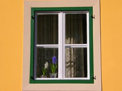 Two is a pair (Plavistribor) Tags: sun window happy joy croatia loveit zagreb hyacinth polyp aplusphoto