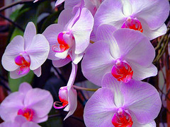 P.S.  I LOVE YOU!!! (Terri.Flickr.Chic ) Tags: orchid canon ken onemomentintime psiloveyou photobyterri xoxoxoxoxoxo terriflickrchic canonpowershots5is s5is canons5is