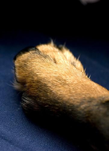 Dog Parts-Toes