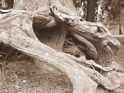 Swoopy treeness