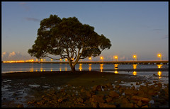 Lone Mangrove Hayes Inlet-05+ (Sheba_Also) Tags: mangrove inlet hayes