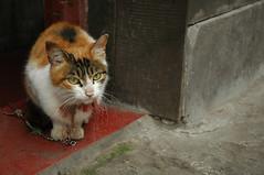 2008-0510-cat09