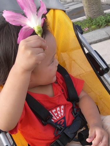 你拍攝的 我愛小花。