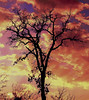 Color in the Sky (Jeff Clow) Tags: winter sunset sky color tree nature silhouette clouds bravo texas quality dfw soe jeffclow nikond80 anawesomeshot superbmasterpiece infinestyle