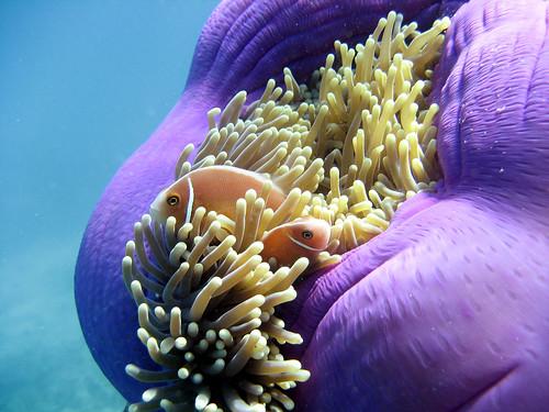 Основная часть рифа имеет возраст