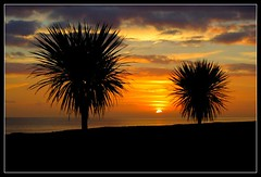 fauxriviera (Ian's Art....) Tags: sunset seascape beach sussex coast worthing saturated colours d70 outdoor silhouettes palmtrees colourful seashore seaview mypick supershot iansart naturesgallery mywinners abigfave platinumphoto ysplix excellentphotographerawards colourartaward exquisiteimage