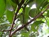 (FabAchi) Tags: macro nature closeup bug mantis insect camouflage predator mantid