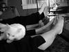 When life is good (sashasue) Tags: kitty thanksgivingdinner immobilized afterdessert feetuptakeabreak andwonderfulgermancoffee holidayfutab thanksjetsquirrell