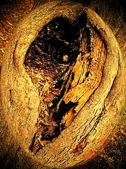 TREE HEART (LinBow) Tags: tree golden searchthebest heart imagination soe blueribbonwinner mywinners abigfave platinumphoto anawesomeshot datacline diamondclassphotographer citrit naturalelegance onlythebestare platinumphotograph perfectphotographer