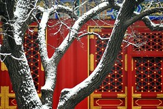 contrast (Luo Shaoyang) Tags: china door winter red white snow tree garden beijing unesco winner  chinesegarden   soe  thesummerpalace   golddragon mywinners anawesomeshot chineseroyalgarden