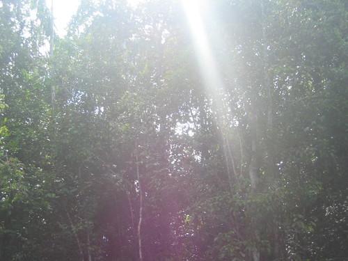 Portal Principal en La Neblina por Red AM.
