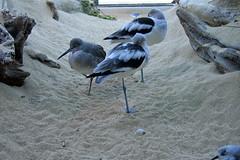 rescue birds