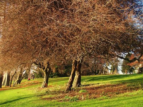 一團凌亂的樹木