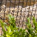 San Diego Zoo 049