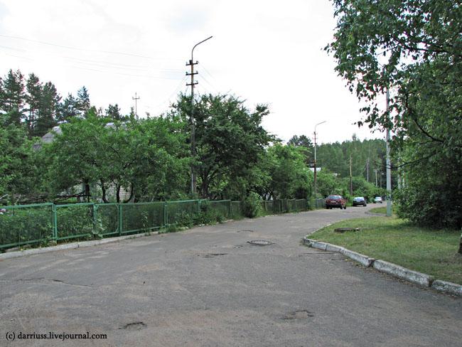 sosny_06