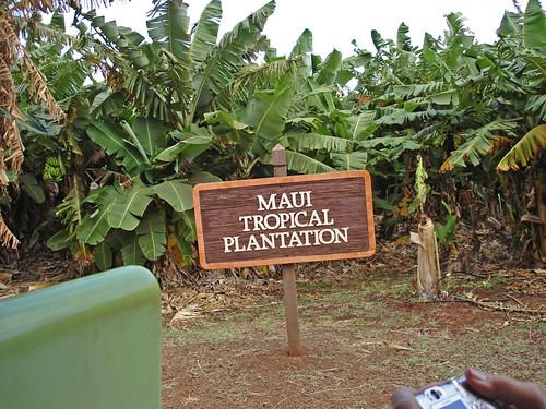 Maui 109
