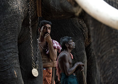Cornacs Waiting Alongside Their Elephants During Jagannath Temple Festival, Thalassery, India (Eric Lafforgue) Tags: india elephant animal canon democracy indian ivory indie indians indi indien hind indi inde tusk hodu southasia indland  hindistan 3031 indija   ndia hindustan   lafforgue   ericlafforgue hindia cornac  bhrat  cornacs indhiya bhratavarsha bhratadesha bharatadeshamu bhrrowtbaurshow  hndkastan