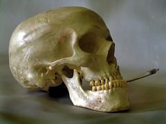 skull (dalinean) Tags: death skull smoke teeth smoking bones