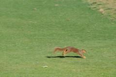 DSC_0918 (rich.reierson@verizon.net) Tags: golf papyrus 2008 isis