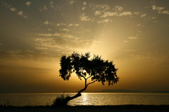tree of light (esther**) Tags: sunset sea sky reflection tree beach yellow clouds landscape island gold bravo view kisses greece rhodes interestingness452