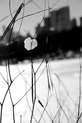 ~~ (digitalmao) Tags: nyc centralpark snow heart wind valentine valentinesday lonelyheart love oneisalonelynumber bemy solitude alone owneroflonelyheart yes
