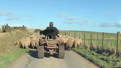 A Flock Of Sheep Taking Orders Pt2. (Dano-Photography) Tags: winter autumn summer spring flock 2017 herding baa lambs freshair baabaa achieved delivered promotion proud achievement goal success weird laugh mad funny quadbike lamb video 4k avi mpeg film movie countryside shepherd livestock nature dano scotia ecosse scotland scottish highlands farmer farming farm ewes ewe sheep smorgasbord savetheearth preservation conservation life vid mp4 bonnyscotland caledonia saltire sunlight leaf weather fun blossom natural world leaves day dawn air bright wet pet gold cute bluesky candid amateur