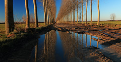 (tozofoto) Tags: europe hungary zala tozofoto canon landscape trees sky colors lights shadows reflection waterreflections travelling travel agriculture