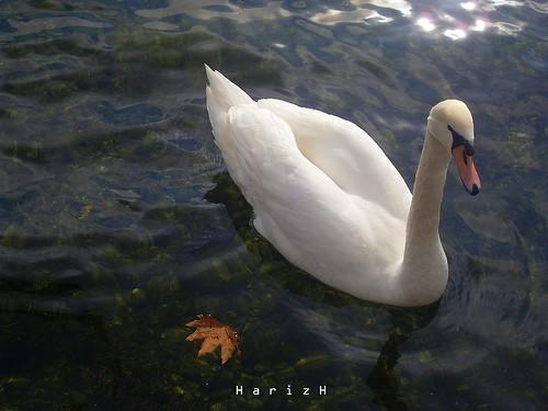 bird at lake 2