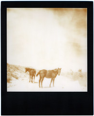 Hillside, AZ (moominsean) Tags: arizona horses sun polaroid sx70 desert heat hillside roaming blackframe thelittledoglaughed autaut alpha1model2 outwithsolexposure silvershade impossibleproject px600 poorpod