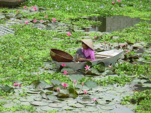 V-Ninh Binh