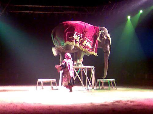 Elefante equilibrista en el Circo Americano de Las Ventas