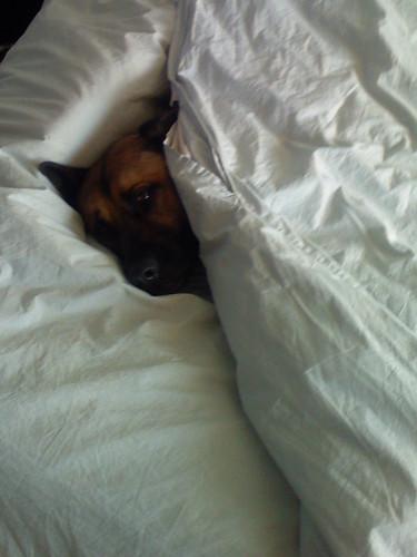 Lola snoozing