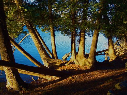 Lake in November